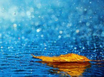 雨の季節:映画『雨に唄えば』