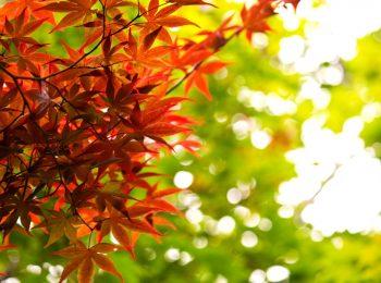 雑学:秋にまつわるモノ②