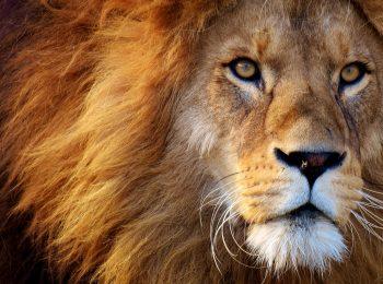 雑談:パラドクス② 人食いライオン