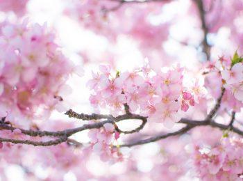 春にまつわる雑学