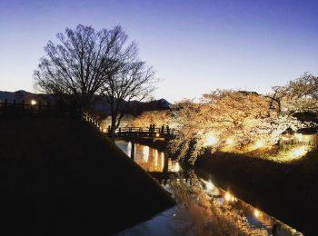夜桜見物 松本城