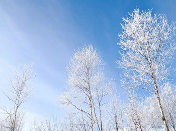 雑学:冬にまつわるもの
